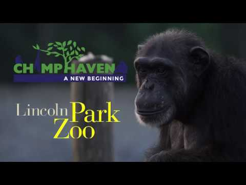 Chimp Haven & Lincoln Park Zoo Collaboration