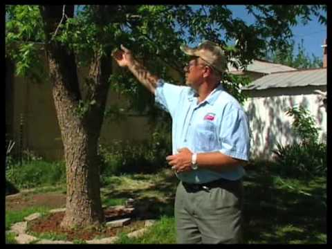 How To Keep Pecan Trees Healthy