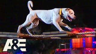 Bruce the Bulldog Moves Cautiously, but Confidently | America's Top Dog (Season 1) | A&E