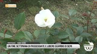 TG BASSANO (09/04/2019) - UN FINE SETTIMANE DI PASSEGGIATE E LIBERO SCAMBIO DI SEMI