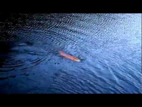 Danebridge Trout Fishing Cheshire