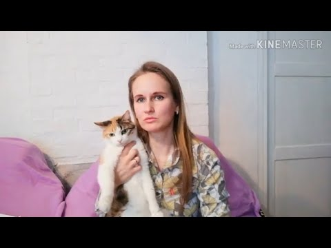 Год спустя после стерилизации кошки. Последствия стерилизации кошки