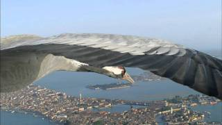 Flying Alongside Common Cranes Over Venice