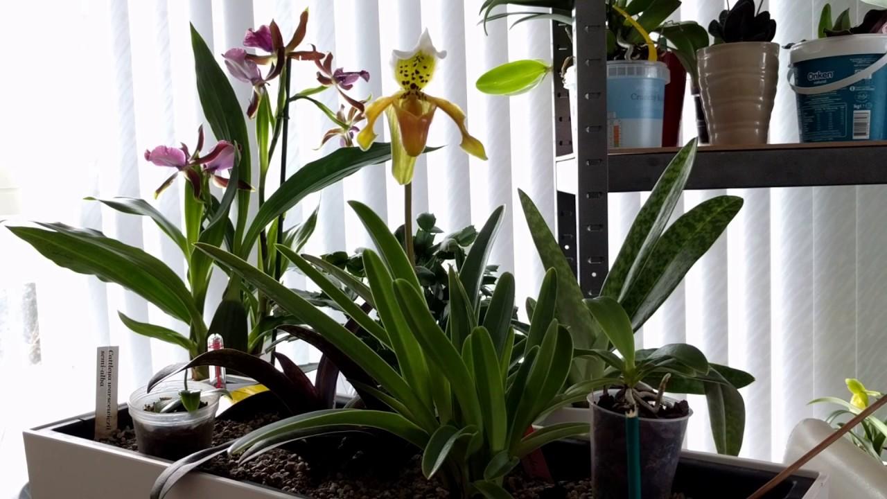 Orchid Id The British Identification Screenshot 3