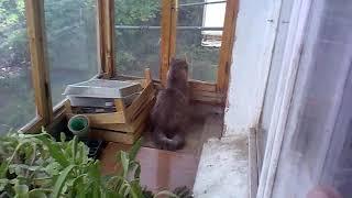 Моя кошка смотрит как соседи окно меняют.