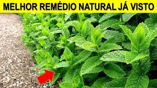 Com 5 Folhas você Destrói Pedras nos Rins, Dores no Corpo e Infecção Urinária