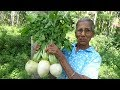 Healthy Village Foods ❤ Cooking Radish Curry in my Village by Grandma