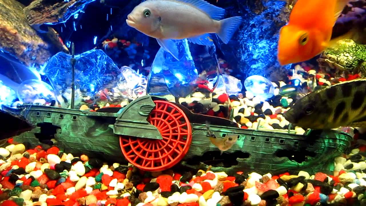 Fish aquarium and good luck - My Fish Tanks Carnivores And Tropical Feeding Time Part 3 Enjoy Good Luck