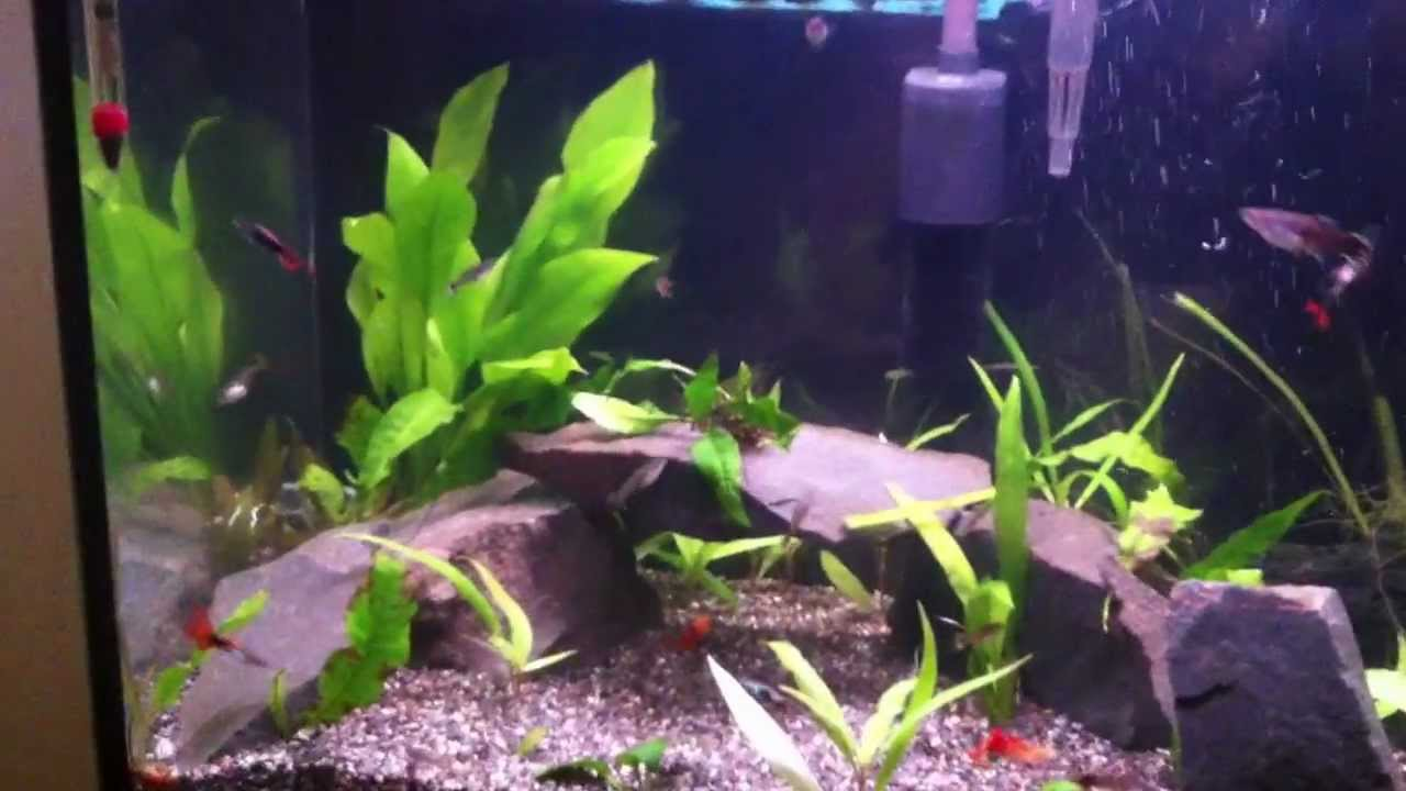 20 gallon guppy tank and 25 gallon angelfish and goldfish for Aquarium angle