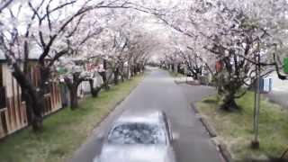 2013岩脇公園-桜満開・桜のトンネル(徳島県阿南市羽ノ浦町)ARDrone2.0空撮