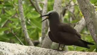 Île Rodrigues :  Ile Coco, un sanctuaire Ornithologique