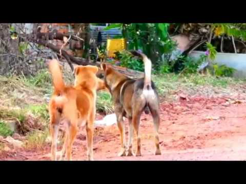 To Play Making Rural Dog | My village dog power | The smart team matting summer on road