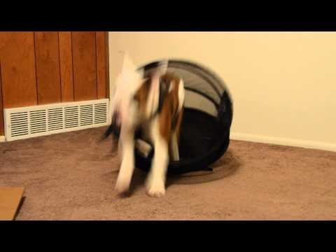 Penny in a basket