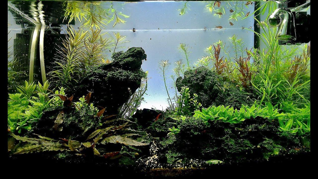 Fish Tank Wallpaper Hd Maintenance Aquascape 25l Quot Death Valley Quot Youtube