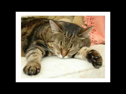 Brenda Griffin webcast Stress Reduction for Shelter Cats