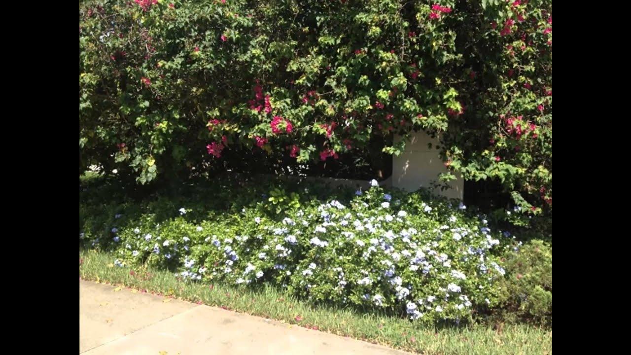 Florida Ground Cover Plants