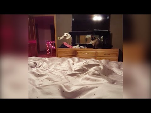 Original Video: Cat Tries to Jump Onto Bed But Fails
