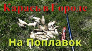 Карась в мае на маховую удочку Рыбалка на городском озере