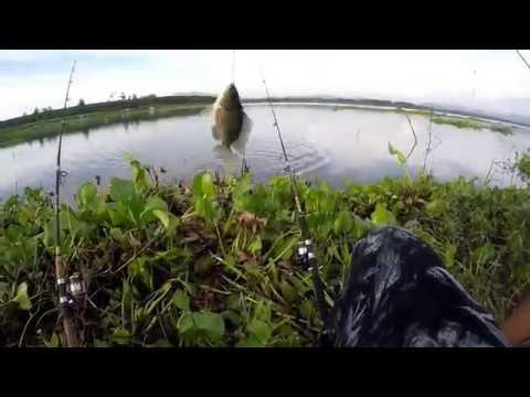 ทริปตกปลานิล ตกปลาหน้าดิน..ฟ้าหลังฝนหมายธรรมชาติปลาชุม
