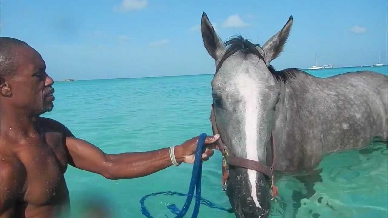 World Heritage Tourism Barbados Holidays Polo Horse