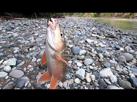 Traditional: Cast Net Fishing In The River | Catch Fish And Eels In The River With Beautiful Nature