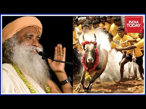 Exclusive : Sadhguru Jaggi Vasudev Speaks Out For Jallikattu