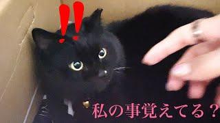 里親に渡した保護した黒猫に1ヶ月ぶりに再会しました
