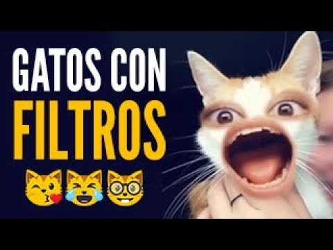 GATOS GRACIOSOS Con FILTROS De SNAPCHAT, INSTAGRAM Y TIK TOK 2018 😹 FUNNY CAT COMPILATION 🔥