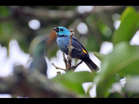 Animais da Paraíba - Mata Atlântica