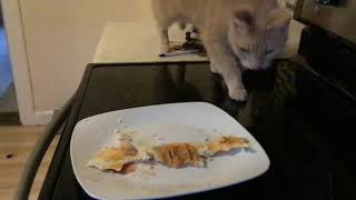 Apparently my cat like potatoes, chicken and hot sauce
