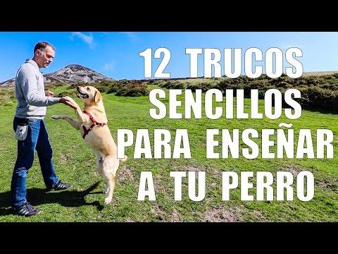 Adiestramiento Canino - 12 TRUCOS para Enseñar a tu Perro
