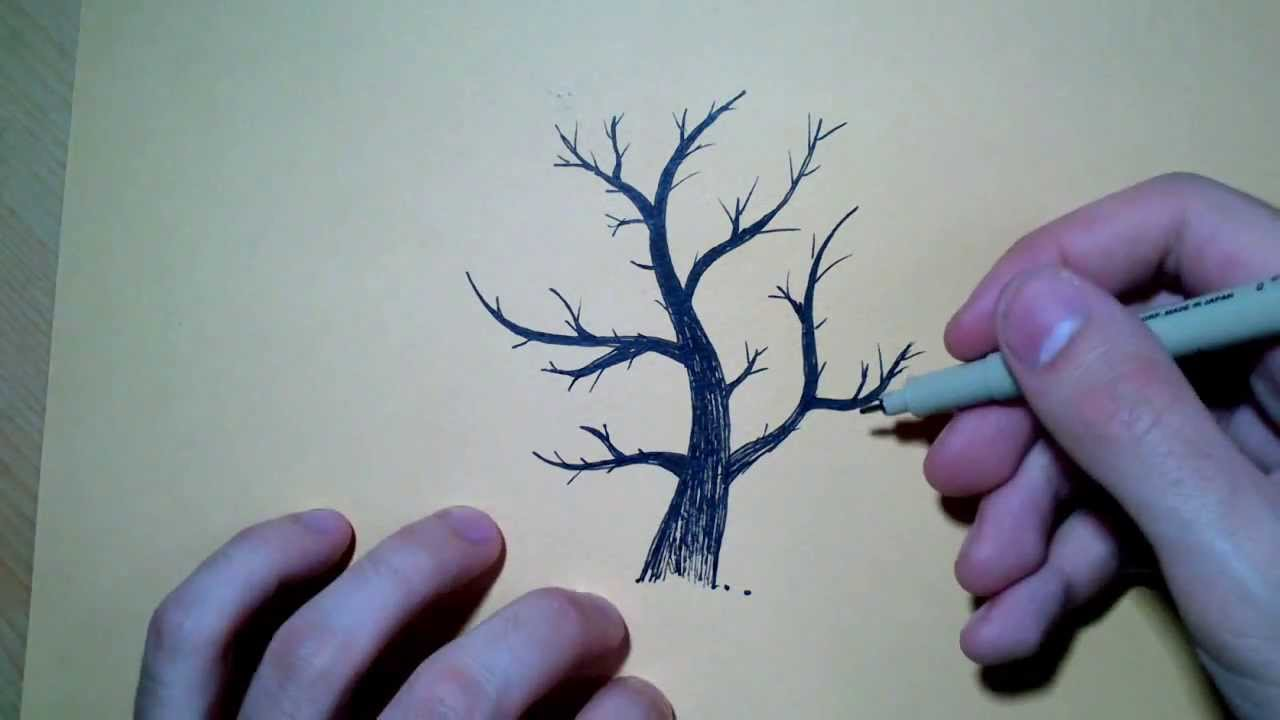 Coloriage Arbre Feuille Qui Tombe.Dessiner La Base D Un Arbre Technique Youtube