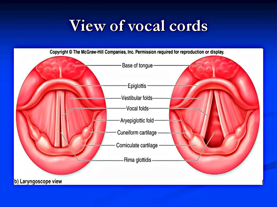Vocal Cord Dysfunction - PowerPoint Presentation - YouTube