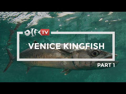 Venice Louisiana Kingfish (Part 1)