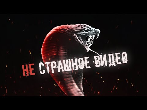 Андрей Затока об экзотических питомцах