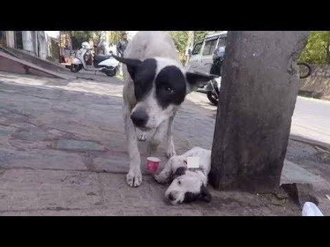 けがをして倒れている子犬を保護しに行くと、そこにいたのは・・