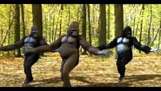 Funny Monkey Dance On Punjabi Dhol  Upload By Dj Tiger Prince