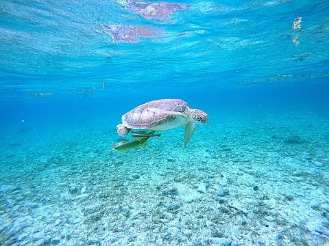 Welcome to Grand Cayman!