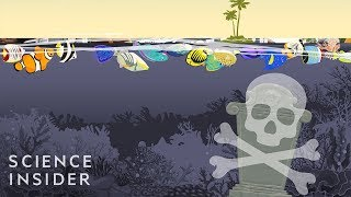 What If All The World's Coral Reefs Disappeared?