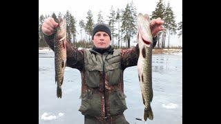 Озеро МАЛАЯ ГАРАВА ЩУКИ ОКУНИ Зима 2020 Оттепель в январе Ловля полосатого хищника в зимой