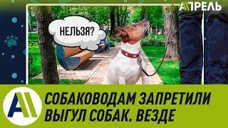 Собаководам запретили выгул собак. Везде \\ Апрель ТВ