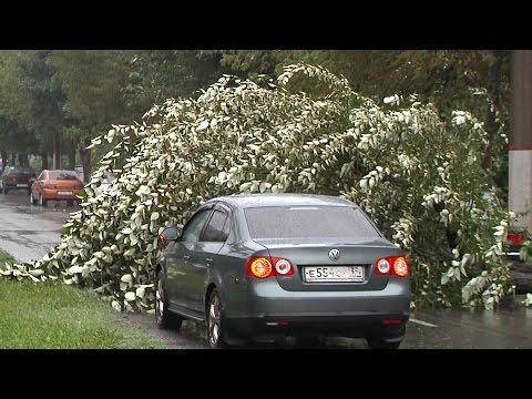 На проспекте Строителей упало дерево