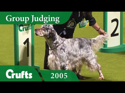 English Setter wins Gundog Group Judging at Crufts 2005