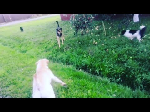 Нападение собаки.