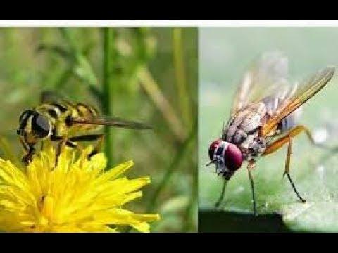 el-elogio-de-la-abeja