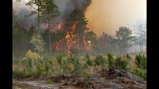 أخبار عالمية | الحرائق تجتاح عدداً من البلدان حول العالم نتيجة لارتفاع درجات الحرارة