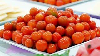 [친환경]방울토마토첫수확,유기농텃밭가꾸기,한농복구회,돌…