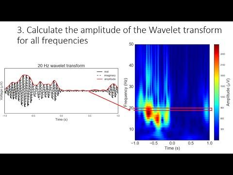 Filtering neural signals and processing oscillation amplitude