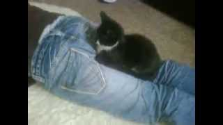 Funniest fart ever (on a cat)