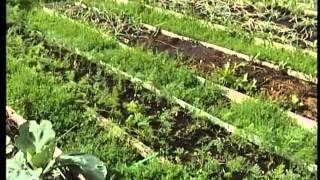 """Чаллы ТВ - """"Удачный сезон"""" - Кому лень копаться в огороде"""